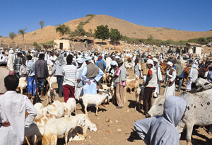 Animal market in Eritrea