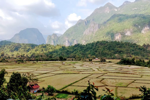 A rice field in Laos - Photo: Unsplash / Pascal Muller